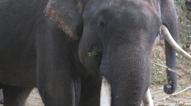 Did you say Wild Elephants?!!!